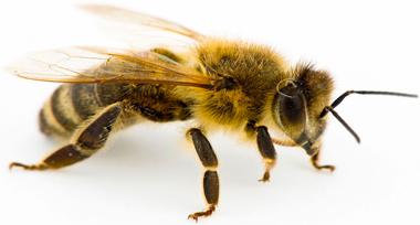 IDFG ile-de-France destruction abeilles